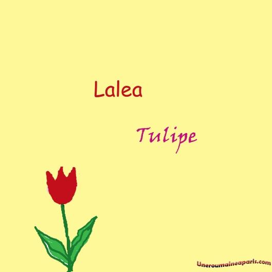 lalea