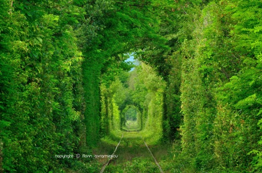 Tunnel of Love - Romania1