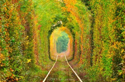 Tunnel of Love - Romania2